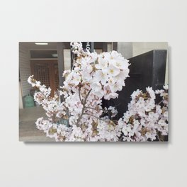 Beginnings of Blossoms Metal Print