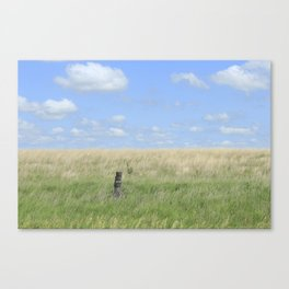 Prairie  grass with fence and blue sky and clouds Canvas Print