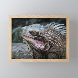 Portrait of an Iguana Framed Mini Art Print