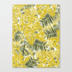 Yellow Mimosa Canvas Print