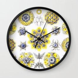 Ernst Haeckel - Polycyttaria Wall Clock