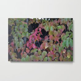 Pretty Fall Dogwood tree leaves Metal Print