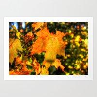 Shades of Fall Art Print