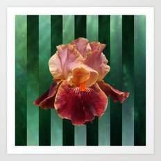 Pink and Red Iris Flower on Green Stripes Art Print