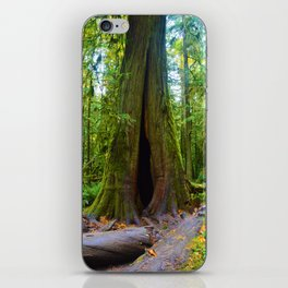 Cathedral Grove on Vancouver Island, BC iPhone Skin