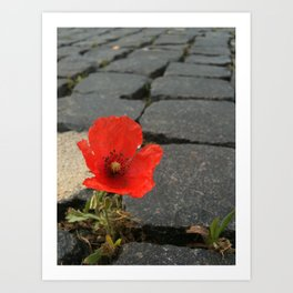 The Poppy in the Cobbles Art Print