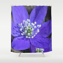 Hepatica blue flower closeup Shower Curtain