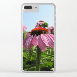 rudbeckia pink flower Clear iPhone Case