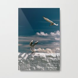 Travel Photography, England, Seagulls on wall, Farne Islands Metal Print