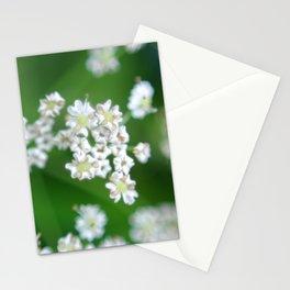 White flowers Beskid Niski Stationery Cards
