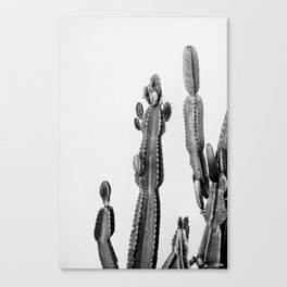 vintage cactus friend Canvas Print