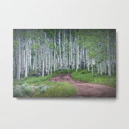 Roadway through a Birch Tree Grove Metal Print