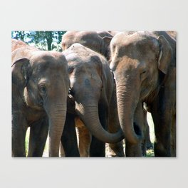 All Girls Together ! Canvas Print