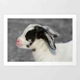The Baby Goat Art Print