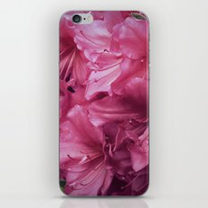 Pink Rhododenrons iPhone & iPod Skin