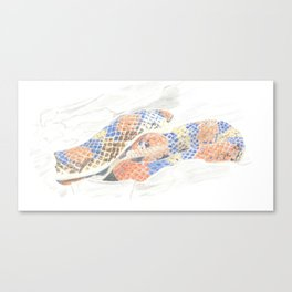 Colour Snake Canvas Print