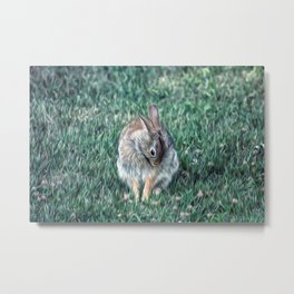 COTTONTAIL IN THE CLOVER Metal Print