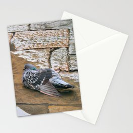 Pigeon in Puddle Photography Stationery Cards