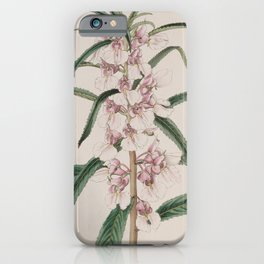 Flower 027 impatiens rosea Small Pink Balsam24 iPhone Case