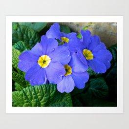 Blue Heartsease Flower Art Print