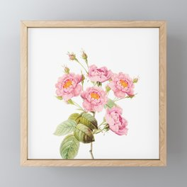 Vintage & Shabby Chic - Bunch of Pink English Roses Framed Mini Art Print