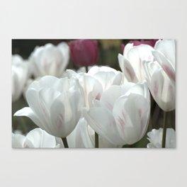 White Tulips in the Garden Canvas Print