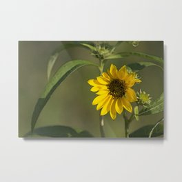 Morning Sun Metal Print