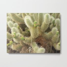 Bird's Nest in Teddy Bear Cholla, #1 Metal Print