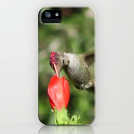 Hummingbird and The Flower iPhone Case