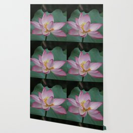 Hangzhou Lotus Wallpaper