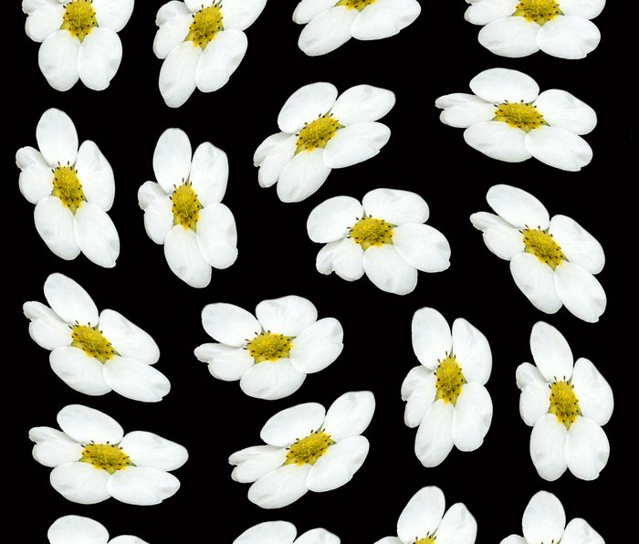 White flowers on a black background #Society6 #buyart Metal Travel Mug