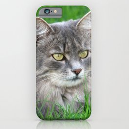 Persian cat in the grass iPhone Case