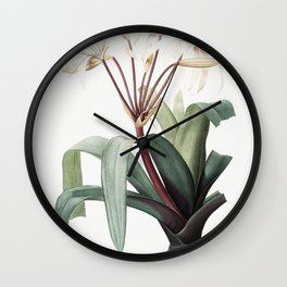 Crinum erubescens  from Les liliacees (1805) by Pierre-Joseph Redoute Wall Clock