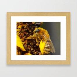 Bumblebee on a Sunflower Framed Art Print