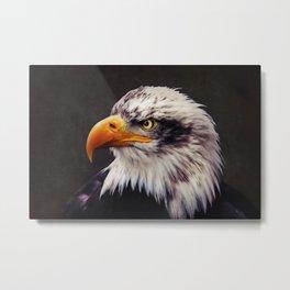 Bald Eagle Metal Print