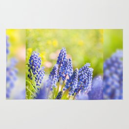 Blue Muscari Mill clump of grapes Rug