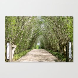 Natural Tree Branch Tunnel Canvas Print