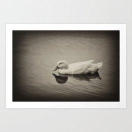 Sleepy Duck Art Print