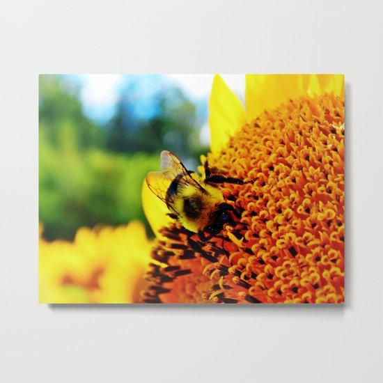 Feasting Bee Metal Print