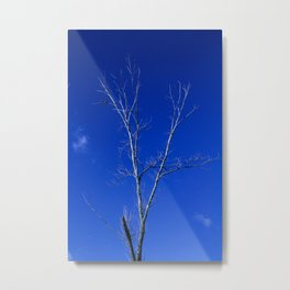 Two small pigeons perched on top of a dry tree on a sunny day. Metal Print