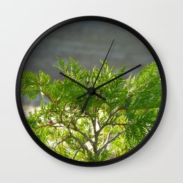 Thuja occidentalis Wall Clock