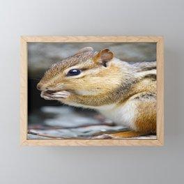 Chipmunk Eating a Nut (Nature Photography) Framed Mini Art Print