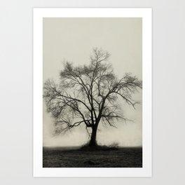 Bare Branches in Winter Fog Art Print