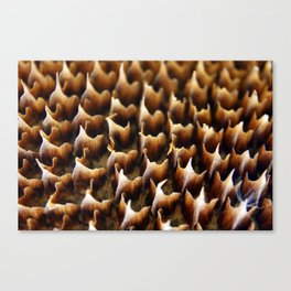 Flames In Nature Canvas Print
