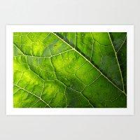 Veins of a Courgette Leaf  Art Print