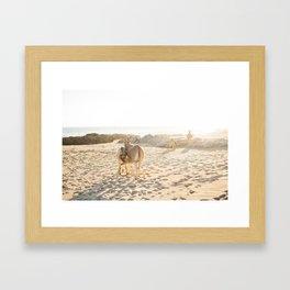 Baja donkeys Framed Art Print