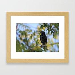 Common Starling Framed Art Print