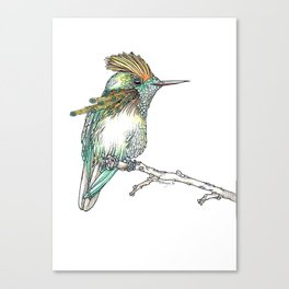 The Tufted Coquette Canvas Print