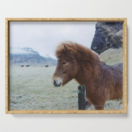 Brown Horse in Iceland Serving Tray