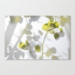 Veiled Aspen 1 Canvas Print